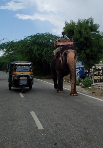 Tuk Tuk Vs Elephant